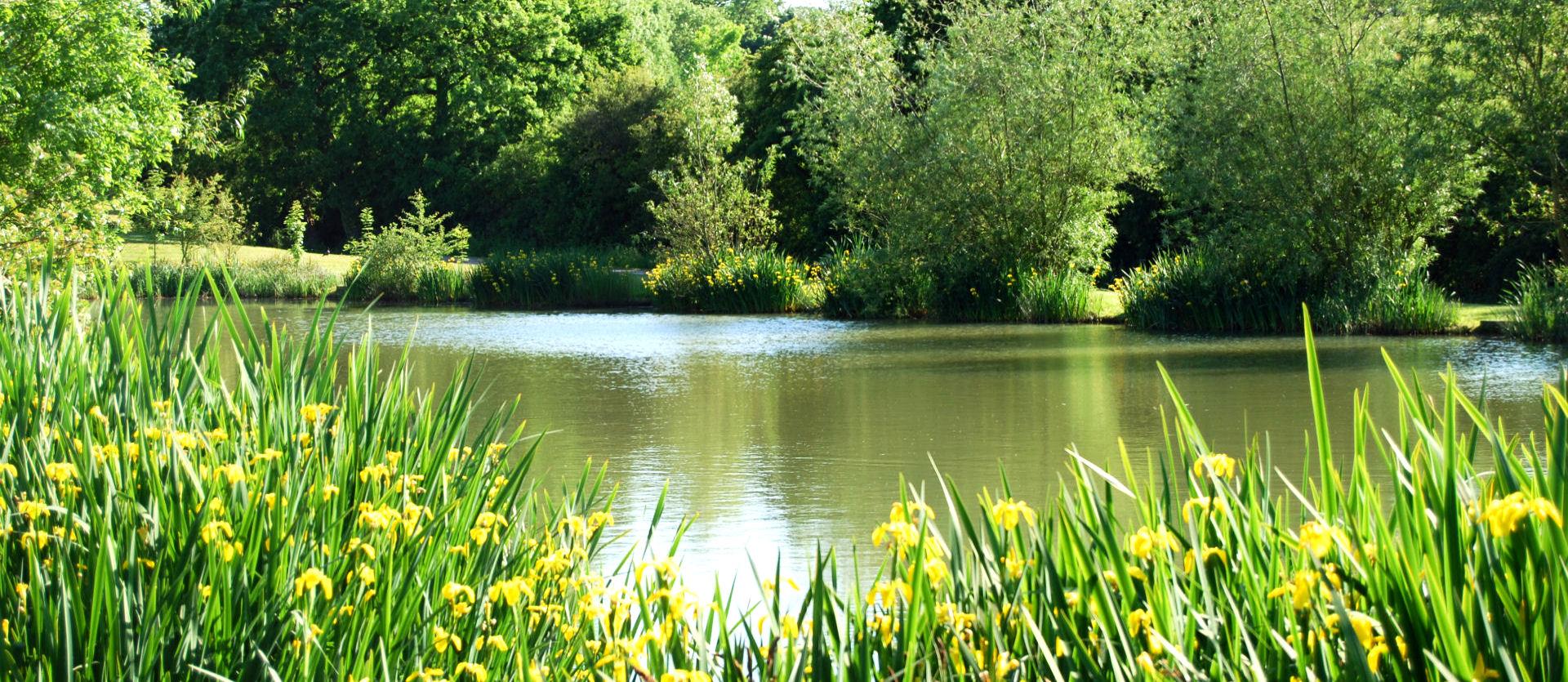 lake_&_irises_1920x835