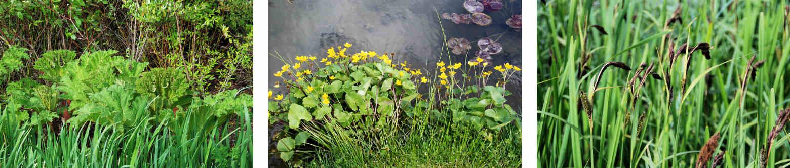 plant_images_1560x332